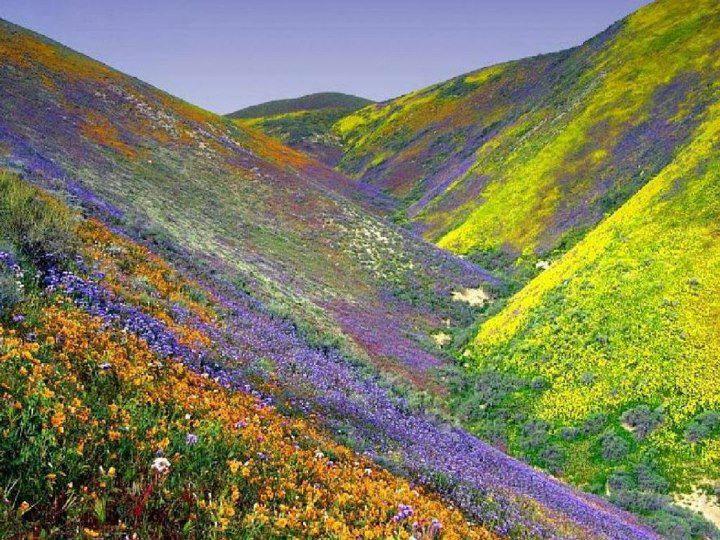 Долина Цветов - это национальный парк, раскинувшийся на склонах Гималаев в Индии. Площадь 87,5 кв. км