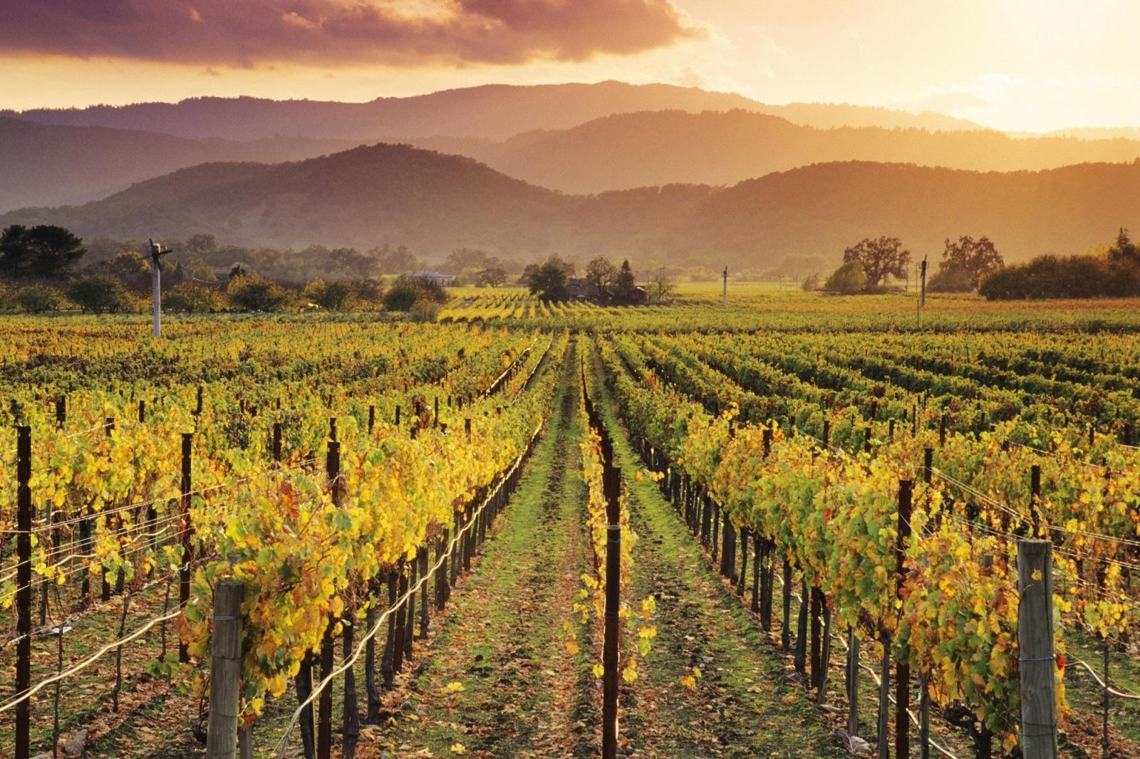 Тоскана - родина знаменитых итальянских вин